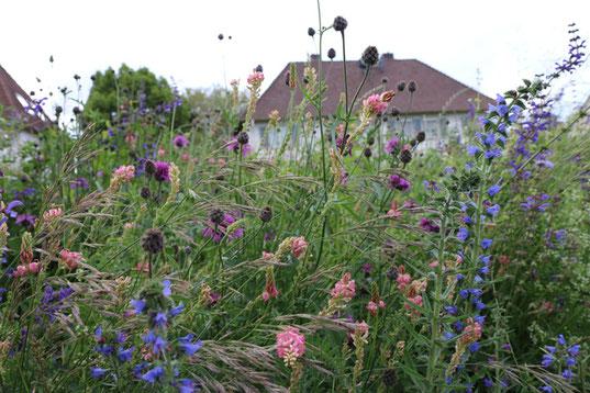 Wildblumen bereichern auch die Stadt, Foto: Annette Marquardt