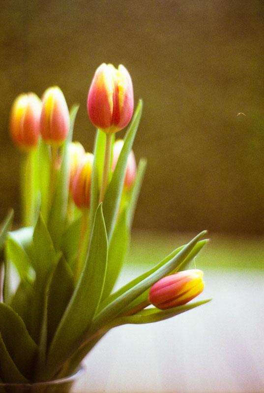 blumige Frühlingsgrüße