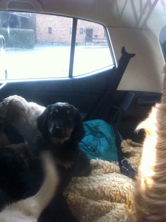 ein Auto voller Hunde (7!)