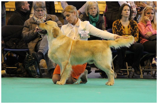VHC Crufts ,22 mois.....