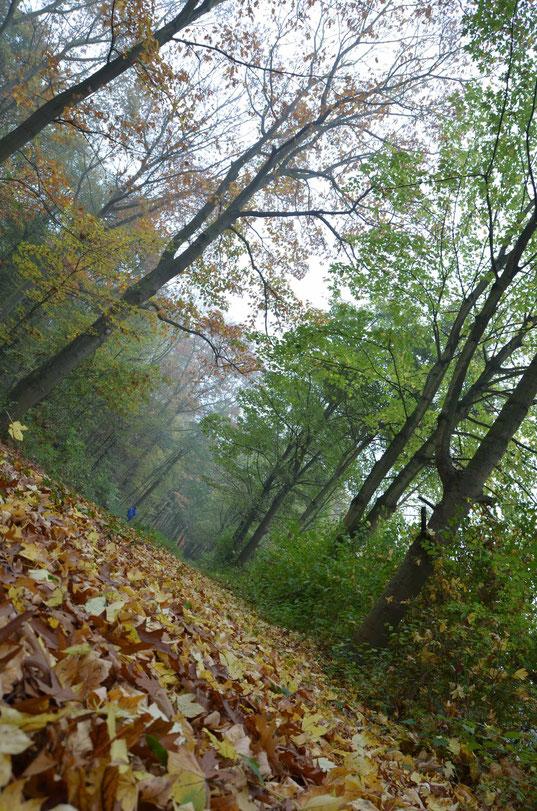 der etwas anderer Waldblick