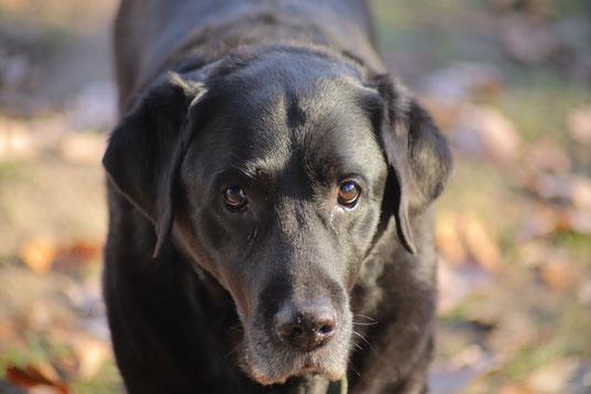 Wotan unser Braver Hund.