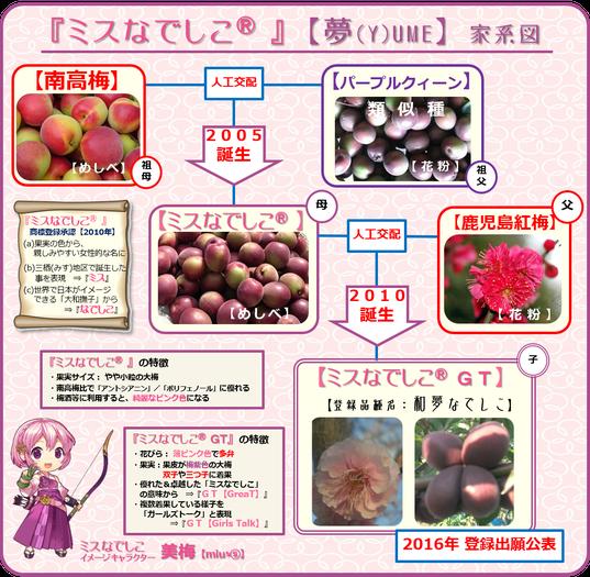 ミスなでしこⓇGT【Y】ume家系図
