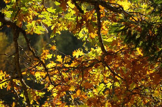 Visit Latvia, weather, beautiful nature all seasons
