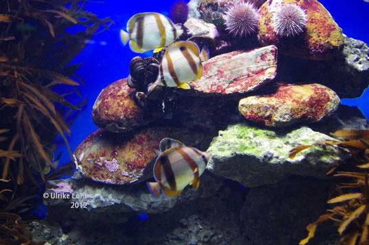 im Two Oceans Aquarium