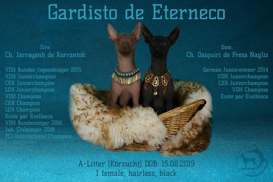 Daiquiri de Fresa Naglis & Jarrayanh de Korrantoh - Gardisto de Eterneco Xoloitzcuintle Miniatur