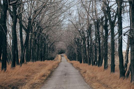 ein Weg, von dem manchmal abgewichen werden sollte  im Coaching bei der Berufung