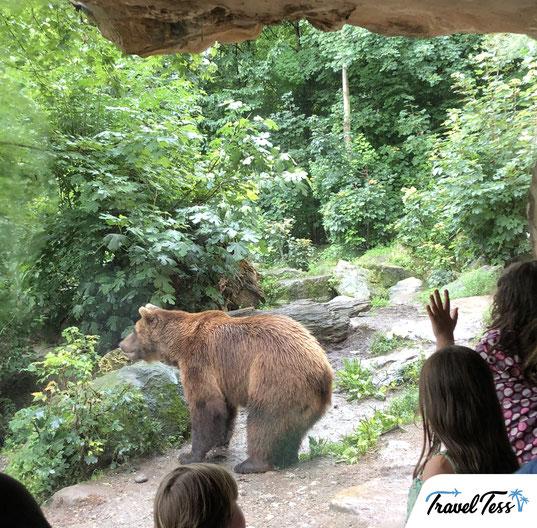 Beer Alpine Zoo