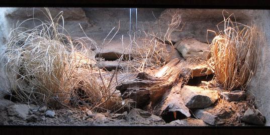 Leopardgeckoterrarium naturnah