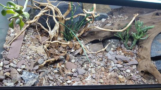 """Leopardgecko Terrarium Steine, Pflanzen, Klettermöglichkeiten und """"versteckte"""" feuchte Höhlen"""