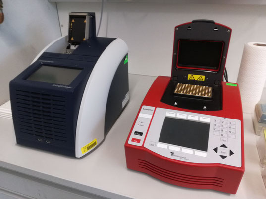 PCR Thermocycler Leopargeckos
