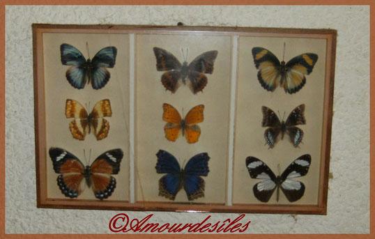Très beaux papillons encore...