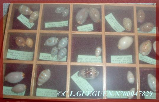 Quelques coquillages étiquetés...Ceux-là sont très rares maintenant depuis un certain nombre d'années...et : Emballées!