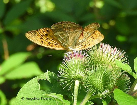 Kaisermantel (Argynnis paphia),   © Mag. Angelika Ficenc