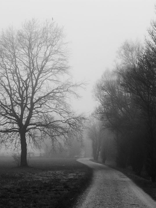 Sinzheim, Kartung, Feldweg, country road, Nebel, Nebelstimmung, foggy day, fog, big tree, großer Baum, Wiese, bird atop the tree, Vogel in der Spitze des Baumes, Schwarzweissfotografie, kreative Fotografie, Fototipps