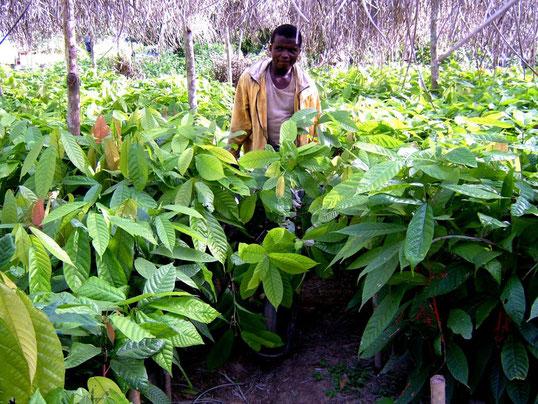 campagna di piantumazione e forestazione di Fogliaviola per sensibilizzare sul clima e la biodiversità