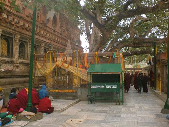 Mahabodhi-Tempel in Bodhgaya, eine der heiligsten Städte des Buddhissmus - Bihar - Indien