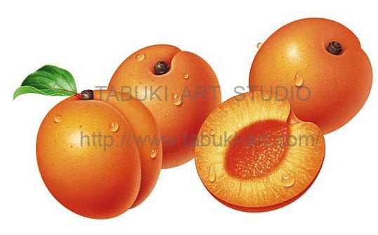杏子の実 アンズの絵 アンズ断面 果実 ジューシー フルーツイラスト fruit illustration