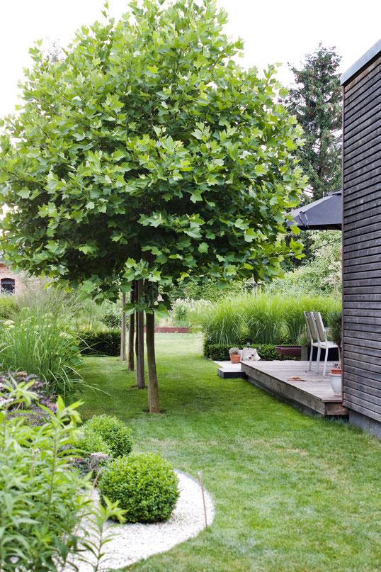 dieartigeGARTEN - Sommergarten mit Schatten von Platanen, Buchs, Ballhortensien, Gräsern