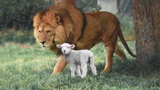 Dans le futur Paradis terrestre, les lions et les agneaux vivront ensemble et mangeront de l'herbe. La paix entre les animaux et entre les humains et les animaux. Les lions seront inoffensifs. Le loup vivra avec l'agneau, le veau et le lionceau...