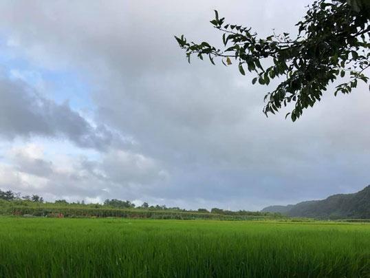 合鴨農法の画像3
