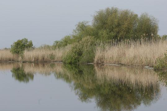 In den charakteristischen Röhricht- und Schilfgebieten gibt es neben den 3 Hauptmündungsarmen der Donau noch viele andere Gewässer.   Foto: Chr. Pfeiffer