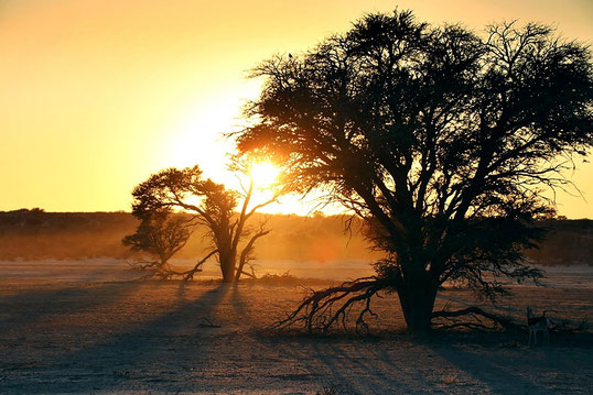 Sonnenaufgang im Kgalagadi National Park