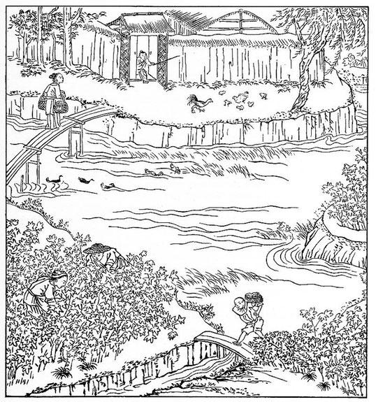 La récolte du coton, d'après une gravure chinoise. Paysage du bas Yang-tseu ; bâtiments en argile et paille, disposés autour d'une cour .