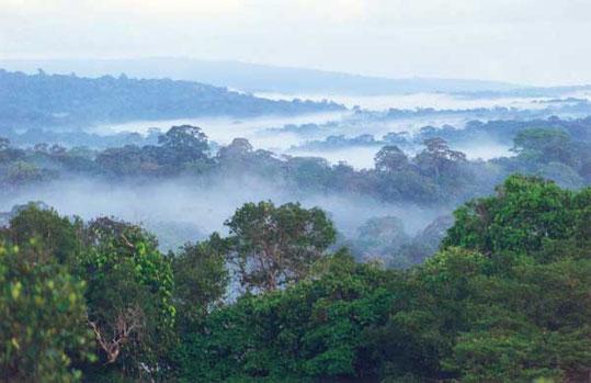 Photo aérienne de la forêt guyanaise près de la savane-roche Virginie. Source : wikipédia.