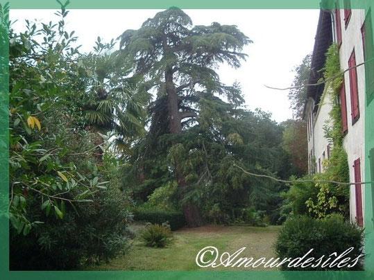 Très bel arbre plus d'une centaine d'années!