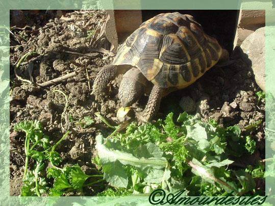 Wallis à 7 ans cet été! Un vrai régal cet escargot et ce persil et ces feuilles de pissenlit....Miam miam!