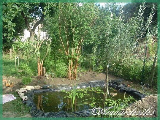 Bassin presque terminé avec des plantes comme Yucca, sédums, cactus, avocatier et bonzais d'extèrieur...