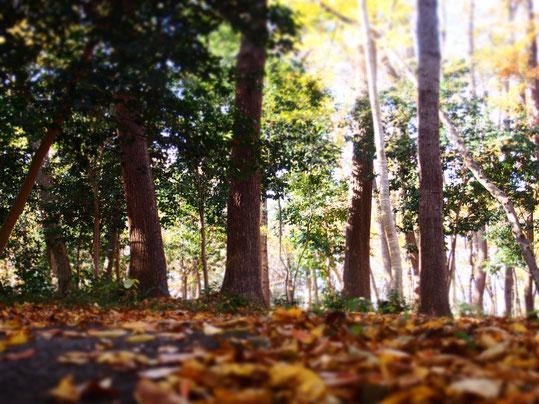 落ち葉の林。駅へ向かう道です。