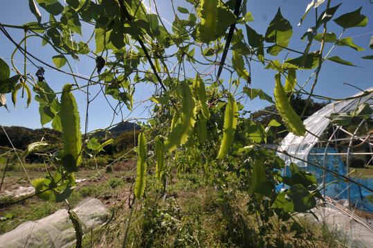 自然栽培 農業体験 体験農場 野菜作り教室