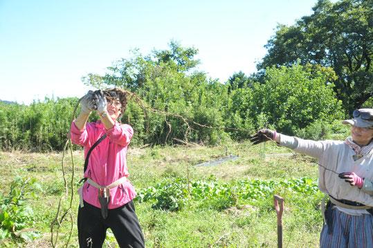 トマト 自然栽培 固定種 農業体験 体験農場 野菜作り教室  さとやま農学校