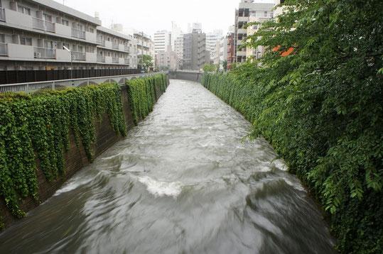 雨の日の神田川…流れが速いんだよ