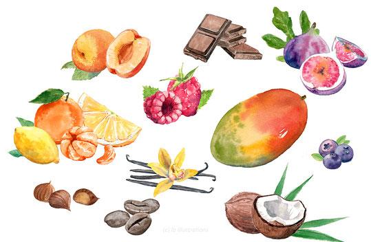 illustration, fruit, yaourt, aquarelle, packaging