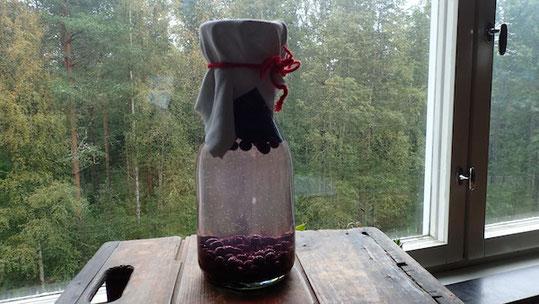 Rezept für schwedischen Fensterwein aus Blaubeeren