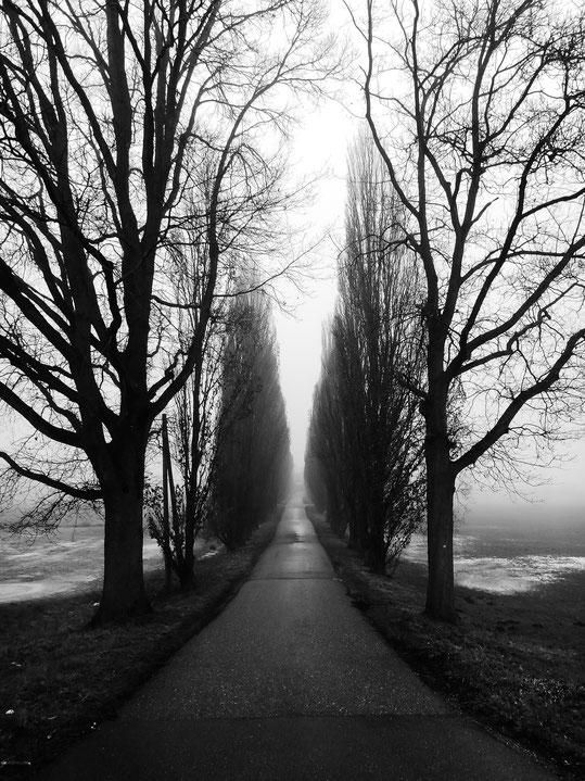 Sinzheim, Kartung, Allee, Nebel, neblig, Nebelstimmung, foggy day, foggy, alley, Schwarzweissfotografie, kreative Fotografie, Fototipps