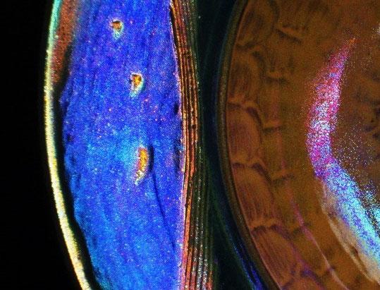 Lustre Dish (detail) 2012