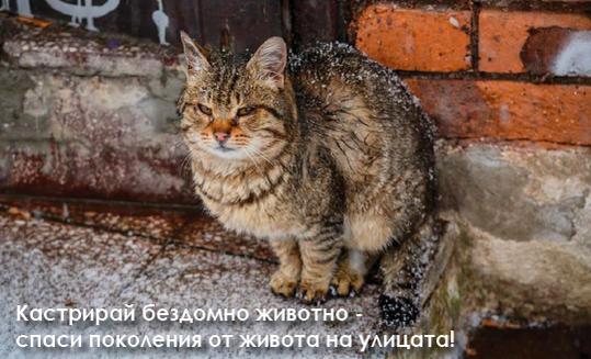 @credit: Етюд-и-те на София: www.facebook.com/etiuditenasofia