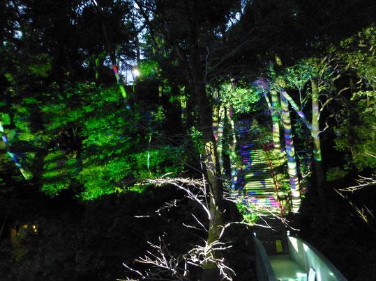 白根神社のライトアップ 2017-3-19