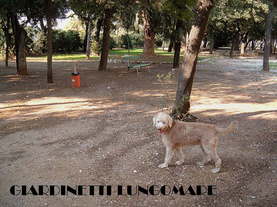VIALE ITALIA (CANE DA FAVOLLO ALL'OMBRA)