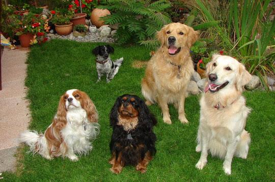 Charly, Mandy, Shady und Roxy mit seiner Freundin Joya