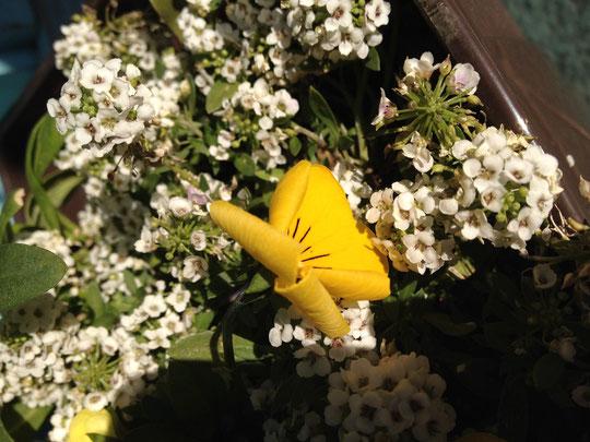 とても簡単に、花を長く咲かせる方法とは?