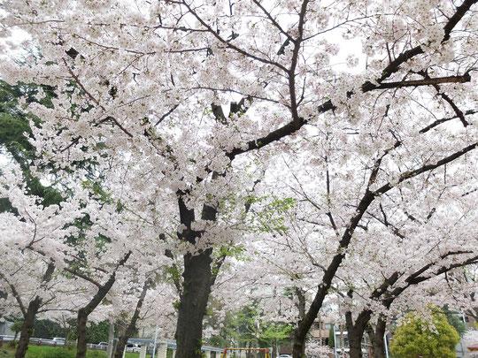 花の下で春を満喫したい!