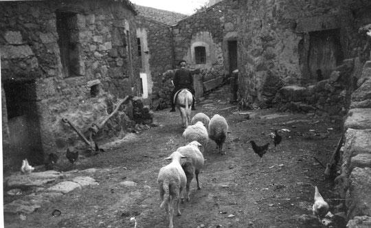 Estampa rural donde se aprecian: arado, ovejas, gallinas y un jinete sobre un burro. Años 50.F. de Pedro. P. Privada.