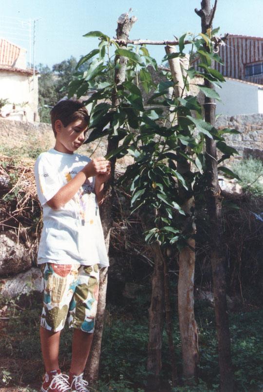 A Javi le hemos plantado un árbol........ ¡ Un cerezo picoto !