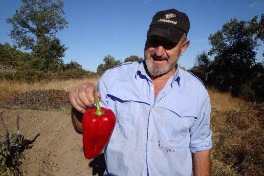 ¡ Vaya pimientos cultiva don Pepito !
