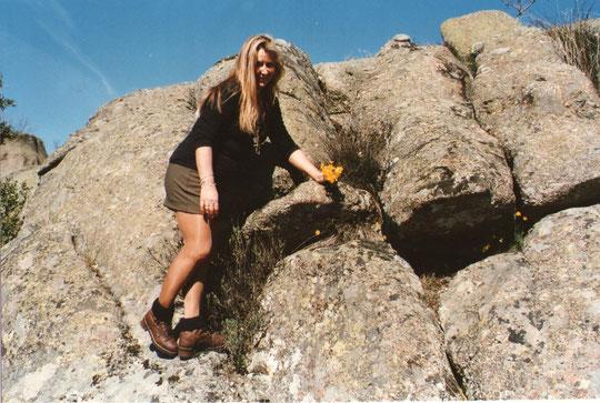 Esta variedad crece en las ranuras de las rocas.